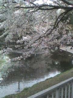 桜 〜 その2 〜
