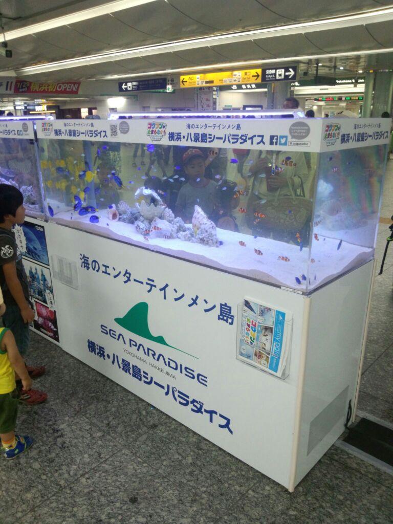 八景島シーパラの水槽